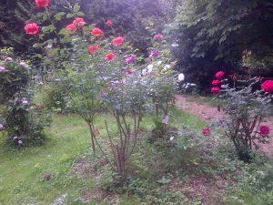 Une entrée fleurie; merci à Désiré, ancien voileux reconverti en retraité jardinier